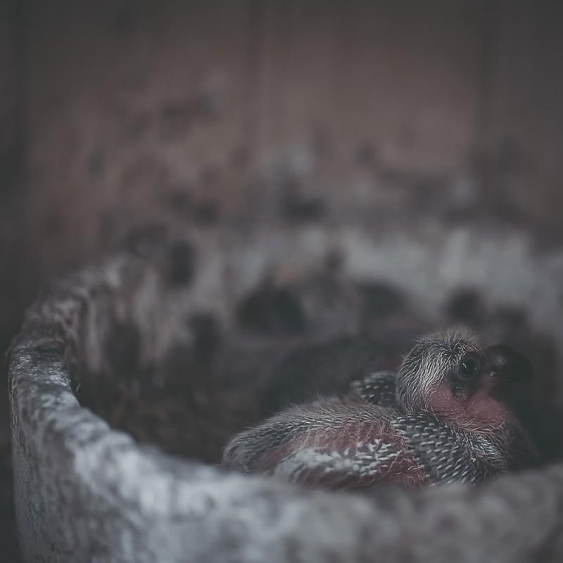 KROUŽKOVÁNÍ holoubat